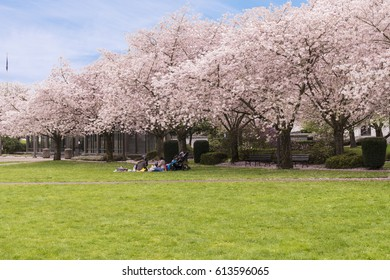 Saturday in the Park, Family having a Picnic Under Blooming Pink Cherry Trees