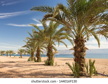 Saudi Arabia Persian Gulf luxury sand beach with palm trees perspective nature scenery landscape photography in summer warm vacation season time and clear weather
