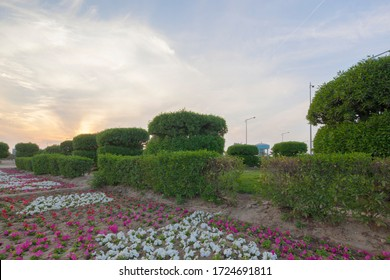 Saudi park view at sunset time with Green plants