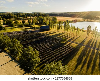 Sault Restaurant, Daylesford, Victoria, Australia: Beautiful lavender farm with lovely house at Sunset, 06/01/2019, drone view aerial, sun flare
