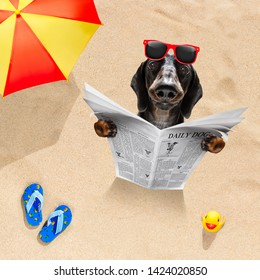 sausage dachshund dog at the beach reads newspaper in sand under umbrella on summer holiday vacation at the ocean beach