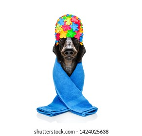 sausage dachshund dog wearing a bath shower cap and a towel, ready for a spa wellness treatment