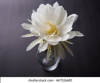 Saussurea Obvallata / brahma kamal is the mythical white lotus/flower. It is found in Himalayas and Uttarakhand, India. Placed in a glass pot or vase over colourful background, selective focus