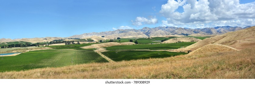 Sauvignon Blanc Grape Vines panorama in the Awatere Valley,  Marlborough, New Zealand in mid-summer.