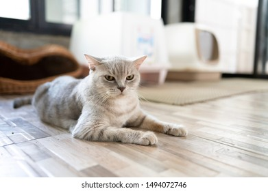 Savage cat in the house of a cat