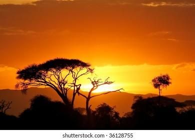 Savanna bush at sunset