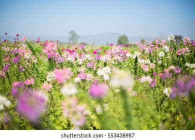 savanna flower fields in blue sky and mountain in background