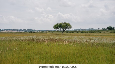 Savanna in Inner Mongolia, China. A savanna is a mixed woodland-grassland ecosystem.