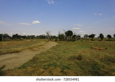 Savanna landscape in Africa. Kenya. Tsavo park. Eastern Africa