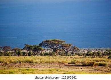 Savanna landscape, foot of the Mount Kilimanjaro in Africa, Amboseli, Kenya
