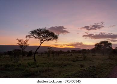 Savanna plain with acacia trees at dawn against distance view on mountain. Serengeti National Park, Tanzania, Africa.