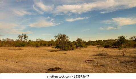 Savanna, South Africa