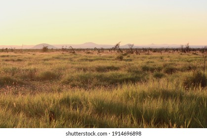 Savanna at sunset, Madikwe Reserve, South Africa. Panoramic view. beautiful and colorful sky in the background. - Shutterstock ID 1914696898