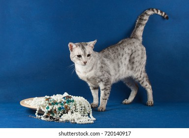 The Savannah is a hybrid cat breed. It is a cross between a serval and a domestic cat.