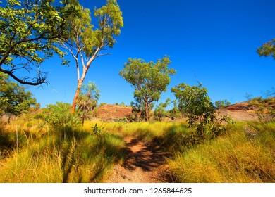 Savannah landscape in the Northern Territory, Australia