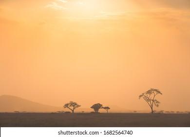 Savannah landscapes with Acacia trees, sunset and safari vehicles