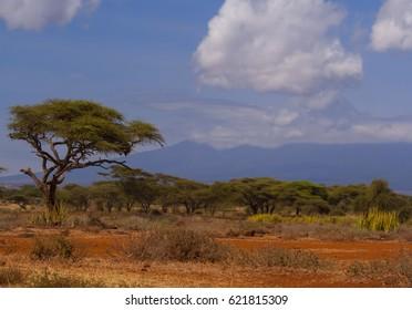 Savannah, national Park, Kenya, Africa