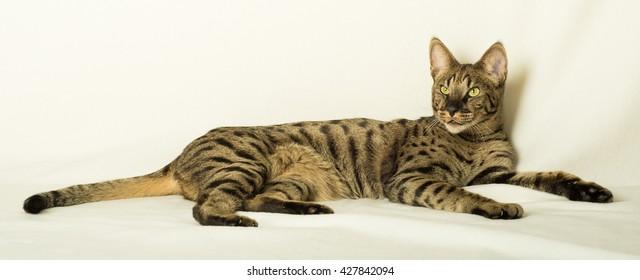 Savannah Relaxing - Full Body 1