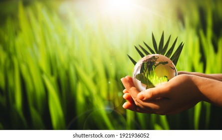 Save Earth. Concept of the Environment World Earth Day Banner. Hands  holding glass green planet on sunny background.