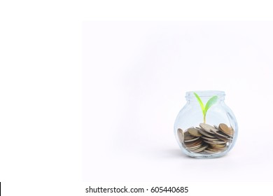 Save money concept - coins in a glass jar with a plant with copy space.
