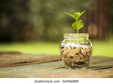 Save money concept - golden coins in a glass jar with a plant