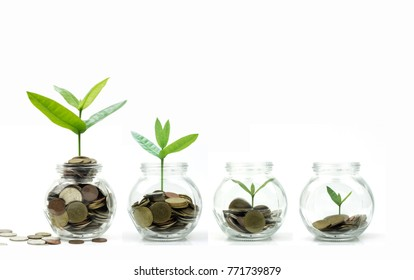 Save money and investment concept, tree and coins growing up in glass isolated on white background