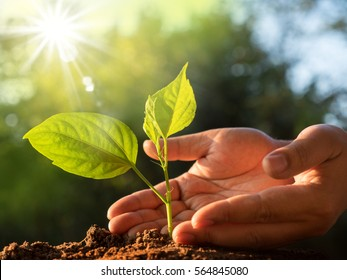 Save Plant concept,Close up male hand care plant over green and morning sunlight environment