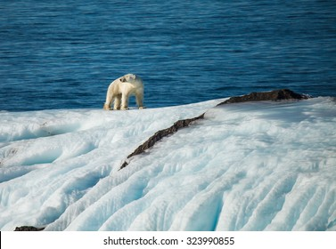 save polar bear in arctic