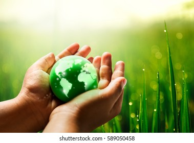 Save world save life concept.The globe in hands with fresh plant background
