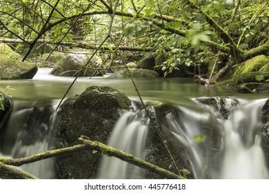 Savegre River, San Gerardo de Dota, Costa Rica