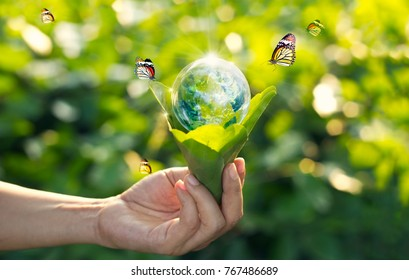 Saving energy concept, Earth day, Hand holding earth in light bulb against nature on green leaf with butterfly on  green park. Save the earth and Ecological, Element of this image furnished by NASA.