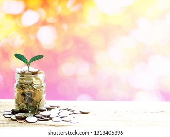 Saving or Investing money concept, Plant growing over coins money in glass jar