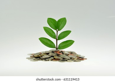 Saving money concept and money coin with tree growing for business and bank