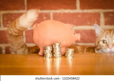 Saving money concept- piggy bank and coins being watched by a ginger cat