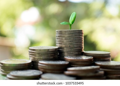 saving money concept,image of stack coins with small green tree on top.