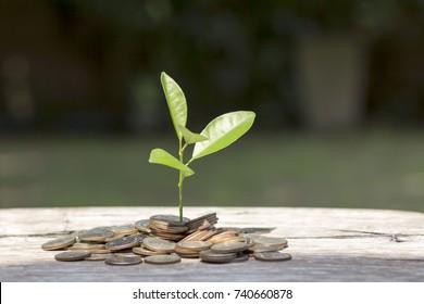 Saving money concept,Investment.