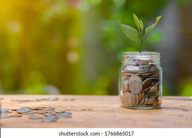 Saving money  puting coins in jug glass on nature background