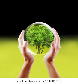 Saving nature concept. Hands holding a tree in a protected bubble.