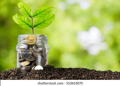 Savings money jar full of coins on soil /Plant Growing In Savings Coins/ investment and etirement or education Concept
