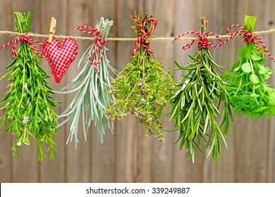 savory, curry plant, thyme, rosemary and basil depends on a leash