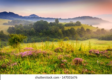savory flowers in dew on the meadow in the mountains of the cool early morning