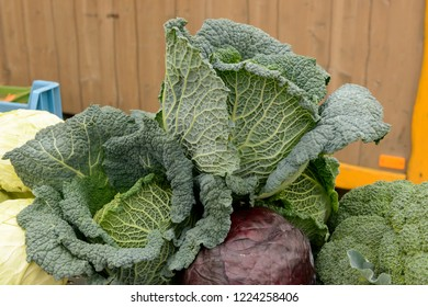 Savoy cabbage heap on sale at Saturday market, shot in bright cloudy light at Ludwigsburg, Germany