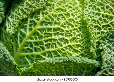 savoy cabbage macro with shallow d.o.f