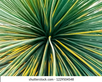 Saw Palmetto plant from the Botanical Garden of Aarhus in Denmark. Graceful green plant that grows in a spiral looking shape.