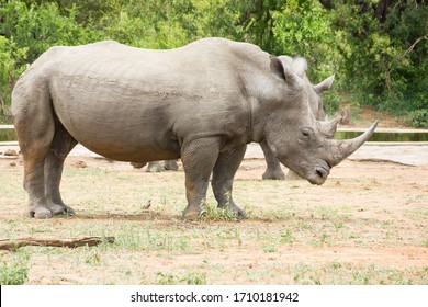 Saw these Rhinoceros while visiting the famous Kruger National Park in South Africa.