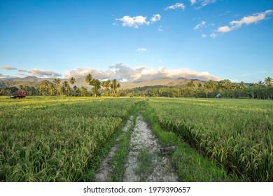 sawah di pedesaan yang masih alami