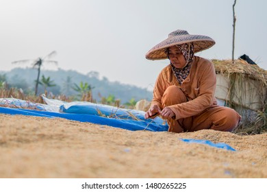 Sawarna, Indonesia. July 9, 2019 Lady farmer drying the paddy under the hot sun after harvesting from the paddy  field in Sawarna.