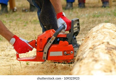 Sawdust flies as a man cuts a fallen tree into logs. A chainsaw in action