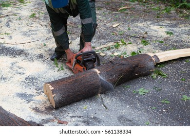 Sawdust flies as a man cuts a fallen tree into logs on the road