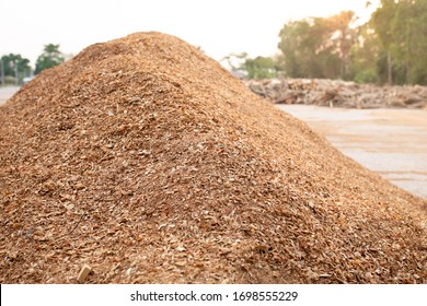 Sawdust or wood dust texture background. Wood sawdust floor texture background closeup.